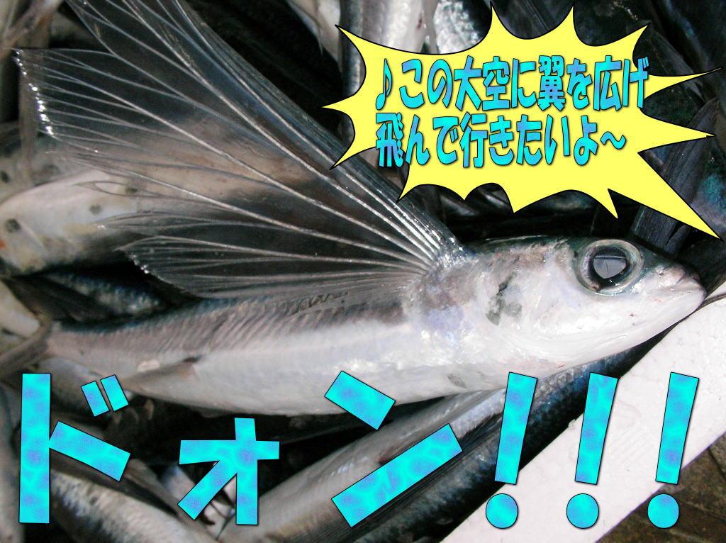 飛魚のささ漬 炙り〆100g