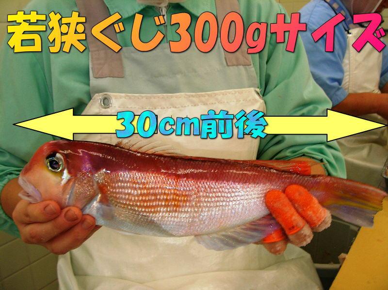 若狭ぐじ(中)300gサイズ一汐or味噌漬けor粕漬けor塩麹