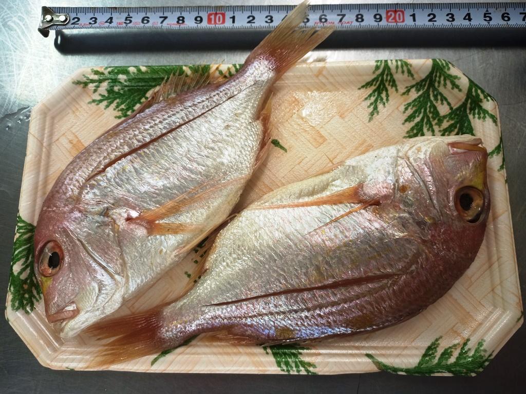 レンコ鯛の醤油干し2匹